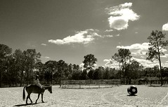 A horse and his boy. (Globetoppers) Tags: picmonkey eraf frodo elijah horse rescue country blackwhite bw logan rider fair florida palm palmcity ball utata