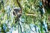 ... senza aspettarti nulla dal di fuori o nell'al di là (Reflexionist) Tags: scoiattolo parco animale allaperto scoiattologrigio mammifero albero foglie verde sanfrancisco sf presidiopark squirrel park animal outdoor graysquirrel mammal tree leaves green nikon nikond750 d750 nikonitalia reflexionist