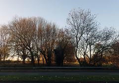 2016_11_280005 (Gwydion M. Williams) Tags: coventry britain greatbritain uk england warwickshire westmidlands tree trees