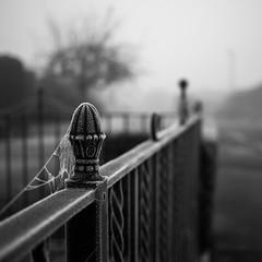 Frozen fence (fishyfish_arcade) Tags: 20mmf17 gx7 lumix panasonic panasonic20mmf17asphlumixg red berries fog frost frosty ice mist weather