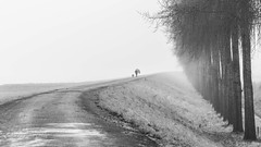 Grey (Ellen van den Doel) Tags: december netherlands winter grijs mist nederland outdoor 2016 weather goereeoverfklakkee dijk trees donker bomen grey dark trotsopflakkee weg landscape fog landschap road way path middelharnis zuidholland nl