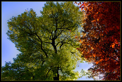 Autumn contrasts (scorpion (13)) Tags: trees leaves nature color creative autumn frame contrasts sun flora cologne