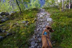 magical way (NaFi4ever) Tags: weg steine stone way norwegen norway jostedal nature beautiful ways landscape explore hiking