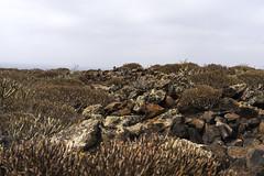 Stone Landscape (wildbam25) Tags: landschaft landscape stone steine busch colors erdfarben farben himmel sky nature natur sony ilce7m2 fe 50mm f18 adventure abenteuer