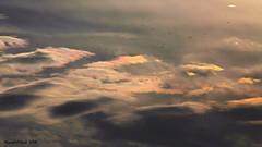 The long flight home ... (Russ Cribb) Tags: iridescent clouds birds flock sky 2016