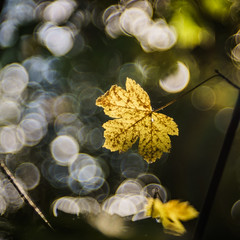 This is the Time to remember (*Capture the Moment*) Tags: 2016 autumn bokeh bubblebokeh bubbles dof deutschland f28 frnkischeschweiz germany herbst meyergrlitztrioplan10028 meyeroptikgrlitztrioplan10028 seifenblasenbokeh sonya7m2 sonya7mii sonya7ii bokehlicious