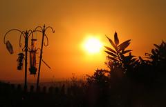 Breakfast Is Served! ('cosmicgirl1960' NEW CANON CAMERA) Tags: sunrise sun silhouettes devon dartmoor home orange black yabbadabbadoo