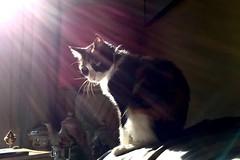 """Gata Luna iluminada"" (atempviatja) Tags: descanso interior mascota gata sol luz"