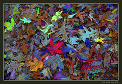 Autumn creativity 3 (cienne45) Tags: creativitautunnale autunno creativit creativo colori foglie foglieecolori vivace astratto autumncreativity autumn leaves color creative creativity leavesandcolors lively abstract bose carlonatale cienne45 natale autumn2016