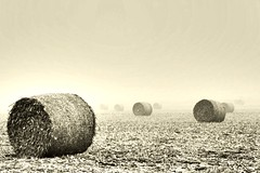 Round Bales on a foggy morning. (Dan Pahnke) Tags: hay field straw bales