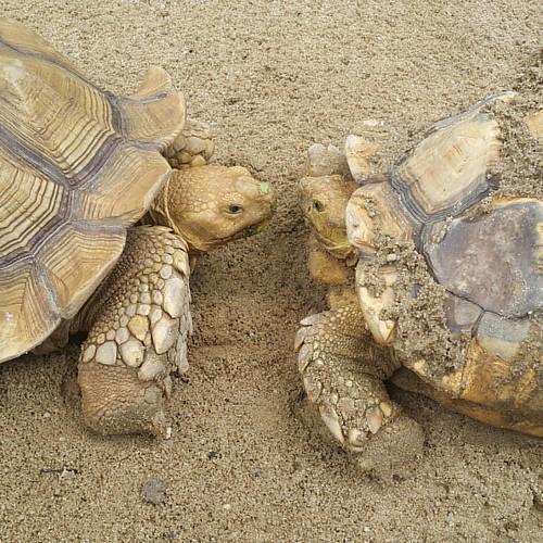 Cinta kura-kura hanya di tv4 setiap malam.