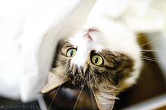 Heaven's gate. (miyukiz4 su ood) Tags: cats cat kitten  gttino chaton gatito ktzchen gatinho