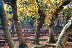 Troodos Geopark (36) (Polis Poliviou) Tags: polispoliviou polis poliviou   cyprus cyprustheallyearroundisland cyprusinyourheart yearroundisland zypern republicofcyprus  cipro  chypre   chipir chipre  kipras ciprus cypr  cypern kypr  sayprus kypros polispoliviou2016 troodosgeopark troodos mediterranean nicosia valley life nature forest historical park trekking hiking winter walking pine pines prodromos limassol paphos fall autumn geopark kakopetria