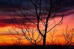 Sunset (Christian He) Tags: ernstbrunn wald canon sonnenuntergang himmel natur outdoor sterreich sonne landschaft dmmerung 700d 24105l wolken winter eos d
