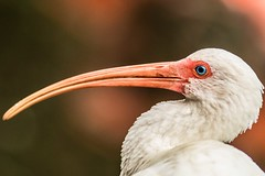21 (photocat001) Tags: flamingogardens botanicalgardens animals wildlife nature parks recreation interesting
