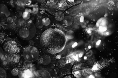 A Silver Christmas (miss.interpretations) Tags: silver monochrome christmas ornament magic night winter evening cold christmastree tree branches pineneedle christmasbokeh christmaslights december2016 castlerock festivalpark colorado canonm3 85mm silverbells white black decoration stringoflights glitter