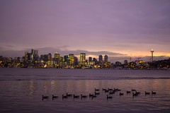 I love being able to share the things that interest me most. And this city is easily one of my F•A•V•O•U•R•I•T•E things in the 🌎 #LonelyPlanet #Seattle (amoolani) Tags: lakewashington westcoast wa washington gasworks gasworkspark cityscape d7100 nikon skyline downtown huskies uw 206 sea pacificnorthwest pnw lonelyplanet seattle