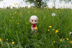 Tippi love the wildflower meadow