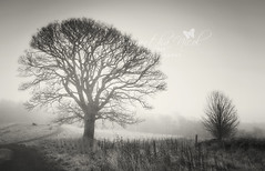 Mono! (Samantha Nicol Art Photography) Tags: trees white mist black art fog mono path samantha nicol
