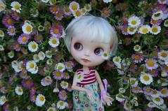 Flowers, Flowers ...