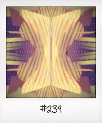 "#DailyPolaroid of 25-5-14 #239 • <a style=""font-size:0.8em;"" href=""http://www.flickr.com/photos/47939785@N05/14565783975/"" target=""_blank"">View on Flickr</a>"