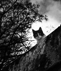 Wilson (Chau DOG) Tags: dog cats pets argentina animal digital cat photography gris photo reflex eyes nikon kat chat foto arte photos gatos ojos gato fotos mao fotografia nikkor cath macska mirada gatto  kot gat kass kaz katt kato felis kissa chau kttur kucing 2014  d90  katu  hauskatze feles gatu catto  kau  jakuma huuschatze  kazh  smkettir nikond90 ghjattu piik gt qattus    niausiok chaudog copyright2014dariogiordanotodoslosderechosreservados