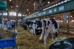 CattleBarn (jmishefske) Tags: wisconsin barn cattle state pentax august fair 2014 westallis k01