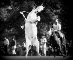 El blanco (Eduardo Amorim) Tags: horses horse southamerica argentina caballo cheval caballos cavalos pferde cavalli cavallo cavalo gauchos pferd pampa hest hevonen chevaux paard gaucho  amricadosul hst gacho  campero amriquedusud provinciadebuenosaires  gachos  sudamrica sanantoniodeareco suramrica amricadelsur  areco sdamerika jineteada   pampaargentina camperos americadelsud gineteada  americameridionale campeiros campeiro eduardoamorim pampaargentino