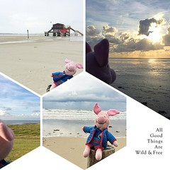 #Ferkel hatte nen fantastischen Tag am #Strand & ließ sich den salzigen #Wind um die Nase wehen.  #Piglet at the #beach.  #sanktpeterording #wind #weather #igtravel #igtravelthursday #instanice #instacool #instaplace #instatravel #instaweather #igweather