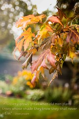 """14-autumns-first-blush (one_man's_life) Tags: old trees plant never men leaf maple know great shade sit when they society whose shall odc grows d600 quebeccanada """"a nikon50mm14 in"""""""