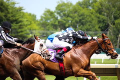 Racetrack (mgiampaolo96) Tags: horses horse racetrack canon action actionshot horseracetrack jocky canonrebelt3i