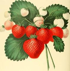Anglų lietuvių žodynas. Žodis ovate reiškia a bot. ovalus (apie lapą) lietuviškai.