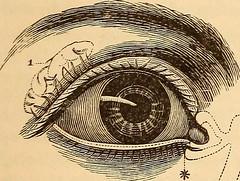 Anglų lietuvių žodynas. Žodis sebaceous reiškia a fiziol. riebalinis; sebaceous glands riebalų liaukos lietuviškai.
