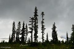 Mount Baker (Stones 55) Tags: trees snow mountains ice clouds washington nikon glacier cascades mountbaker northcascades cascaderange nikond3200 whatcomcounty mtbakersnoqualmienationalforest d3200 parkbuttetrail mountbakernationalrecreationarea