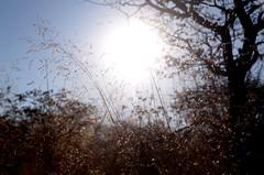 KCC_9085 (kccornell) Tags: africa camping camp grass hike safari namibia etosha