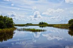 Florida Everglades (Diana Lee Photography) Tags: water clouds florida miami everglades
