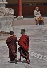 P1160316 (Lyrinda) Tags: india photo buddhist monk buddhism monastery monks himalaya leh himalayas ladakh sheypalace hemismonastery thikseymonastery sankar thiksey hemis stok buddhistmonks shey monasteries gompas hemisgompa sheymonastery sankarmonastery monasterystokgompa