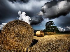 Hay Bales - Staughton Highway (davepickettphotographer) Tags: uk summer storm clouds landscape harvest straw hay bales cambridgeshire huntingdon em1 stneots olympuscamera huntingdonshire greatstaughton saintneots