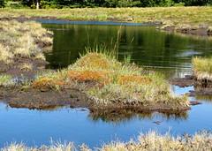 kék tó, zöld tó /  blue lake, green lake (debreczeniemoke) Tags: autumn pond lakeside transylvania bog transilvania tó erdély muskeg ősz tópart láp tőzegláp canonpowershotsx20is gutinhegység tăulchendroaiei gutinmountains