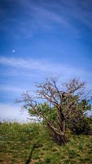 Ambiente-se (Redbraz) Tags: world sky brasil sãopaulo momento visão pensamento reflexão catanduva