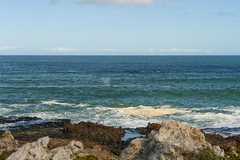 Hermanus46 (atkiteach) Tags: africa sea holiday nature water hermanus clouds landscape honeymoon south whales whalewatching southernrightwhale