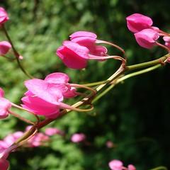 N26 FLOWERS GARDEN, JARDIN FLORAL VIETNAM, Fleurs, Zoo, Jardin Botanique, Botanical Garden, Saigon, Tp HCM, Ho Chi Minh ville, Ho Chi Minh city, Da Lat, Jardin Remarquable, Bambouzeraie d'Anduze, Jardin des Plantes de Paris, Flore Tropicale, (tamycoladelyves) Tags: paris macro cute closeup fleurs wonderful zoo amazing nice fantastic asia priceless awesome great arboretum super vietnam stunning excellent belle tropic asie extraordinaire lovely charming pow dalat botanicalgarden saigon hochiminhcity jardins beau magnifique insolite beautifull delightful nationalgeographic floralpark asiatique jardinbotanique bello historymuseum trange jardindesplantes parcfloral superbe oustanding anduze ravissant roseraie serresdauteuil tropique hochiminhville tphcm surprenant tphochiminh flowersgardens lichsu jardindesplantesdeparis cotourisme jardinfloral thaocamvien vuonhong floralgarden jardinremarquable bambouzeraie serrestropicales natureboheme tamycoladelyves lonelyplanete bbaotang rosegardencity
