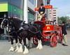 Shire horses of Thwaites Brewery (Tony Worrall) Tags: show england horses beer wagon pull coach nice place northwest north ale lancashire blackburn event horsedrawn drawn relic olden pulled lancs thwaites ©2014tonyworrall danielthwaitesheritage shirehorsesofthwaitesbrewery