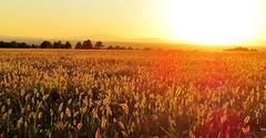 sunset lac de saint croix (explore 19.9.2014) (halloo9) Tags: sunset france topf300 provence topv9999 saintcroix