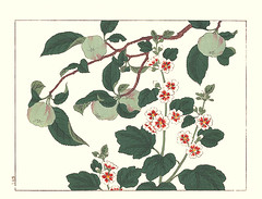 Apple and tall mallow (Japanese Flower and Bird Art) Tags: flower apple malus domestica rosaceae tall mallow malva sylvestris malvaceae hoitsu sakai kiitsu suzuki kimei nakano nihonga woodblock picture book japan japanese art readercollection