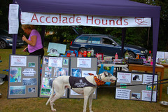 160828 Party On Potton Sunday-0005 (whitbywoof) Tags: accolade hounds stall games tombola rescue adoption foster