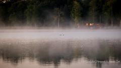 Early (1 of 1) (amndcook) Tags: fog michigan sunrise trees water bird duck lakehuron lescheneauxislands loon mist morning shoreline upperpeninsula