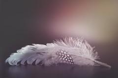 Feathers (Ro Cafe) Tags: pentacon50mmf18 feathers stilllife soft softfocus vintagelens softlight nikond600