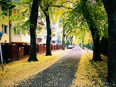 Beautiful autumn  (andreakoi) Tags: nice wonderfulautumn wonderful ilovenature nature beautiful magyarorszg magyar hungary debrecen city outdoor fall autumn