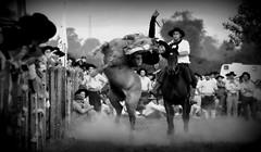 Meio ladeado (Eduardo Amorim) Tags: gacho gachos gaucho gauchos cavalos caballos horses chevaux cavalli pferde caballo horse cheval cavallo pferd crioulo criollo crioulos criollos cavalocrioulo cavaloscrioulos caballocriollo caballoscriollos pampa campanha fronteira bag riograndedosul brsil brasil sudamrica sdamerika suramrica amricadosul southamerica amriquedusud americameridionale amricadelsur americadelsud cavalo         hst hest hevonen  brazil eduardoamorim gineteada jineteada